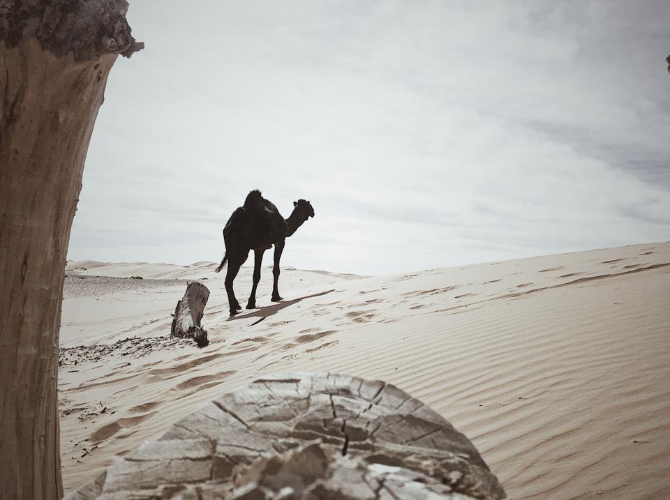 Francesco_Zanet_Marocco_Sahara 0007